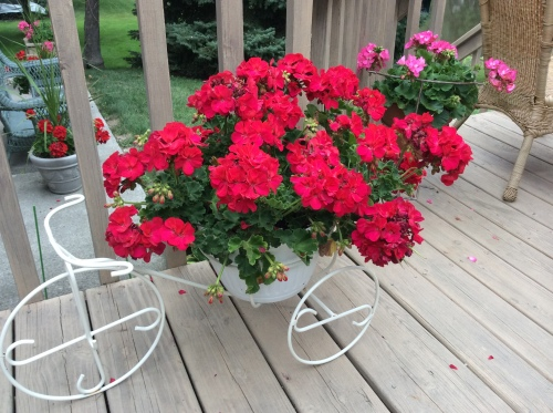Bicycle Stand with Red Geranium