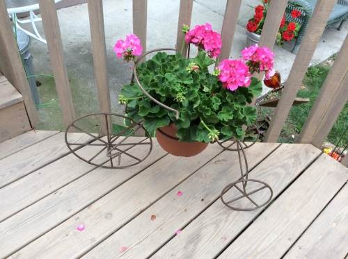 Bicycle Stand with Pink Geranium